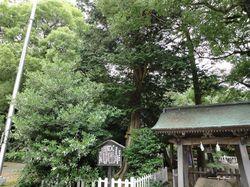 hakuijinjyasawara2.jpg
