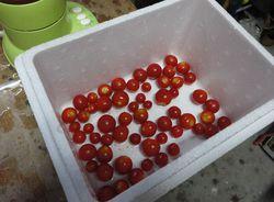 tomato.pyule2.jpg