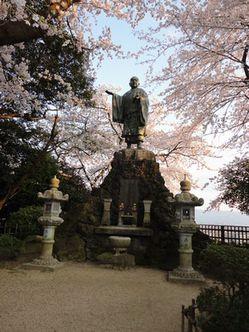 comaruyamasakura2.jpg