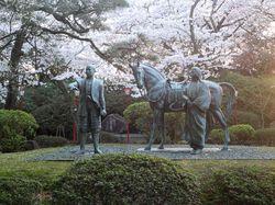 comaruyamasakura4.jpg