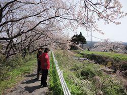 sakuranosato4.jpg